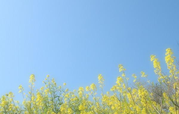 041-crop.jpg