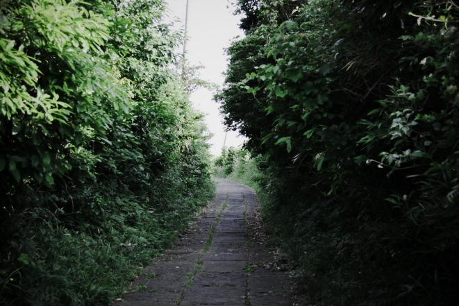 073.jpg